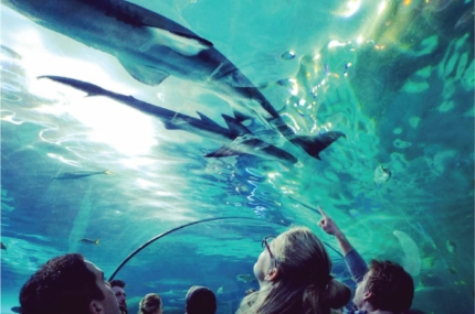 see sights of Toronto Aquarium