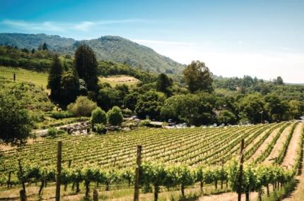 see sights of Concha y Toro vineyard