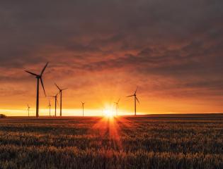 Remote Environmental Internships
