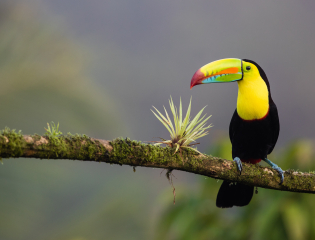 Languages & Translation internships in Costa Rica