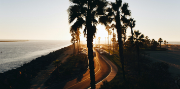 A coastal road lined with palm trees.